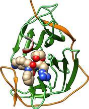 Zikavirus-Protease