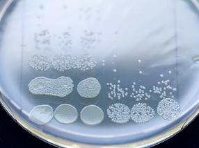 Cellular memory outwits pathogens