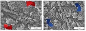 Neue Materialien: Wie Polymerpelze selbstorganisiert wachsen
