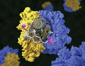 Kryo-Elektronenmikroskopie: Ribosome