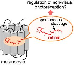 photoreception non-visual