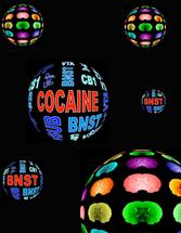 New insights on how cocaine changes the brain
