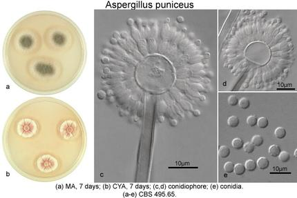 identifizierung von mikroorganismen