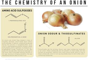 The Chemistry of an Onion