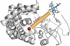 Forscher sehen Biomolekülen bei der Arbeit zu