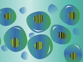 Using barcodes to trace cell development