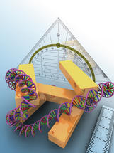 Dreidimensionales Plasmonenlineal zum Vermessen von Zellkernen