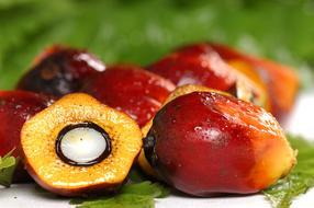 Nachhaltiges Palmöl mit RSPO