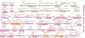 Detailansicht: Aromatische Aminosäuren
