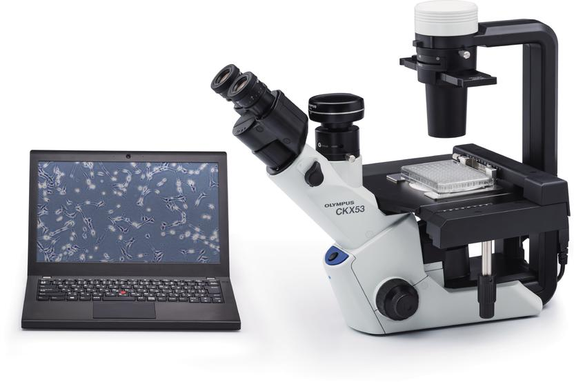 Inverses mikroskop für die zellkultur olympus ckx
