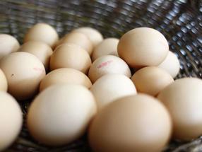Eierschalen bestehen aus porösem Calciumcarbonat, das sich sehr gut für elektrochemische Speicher eignet