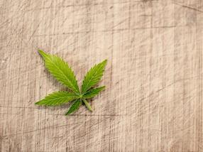 Deutsches Start-up schließt weltweit größten Importvertrag für pharmazeutisches Cannabis ab