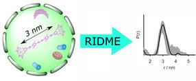 Neues Verfahren für die Abstandsmessung innerhalb von Zellen