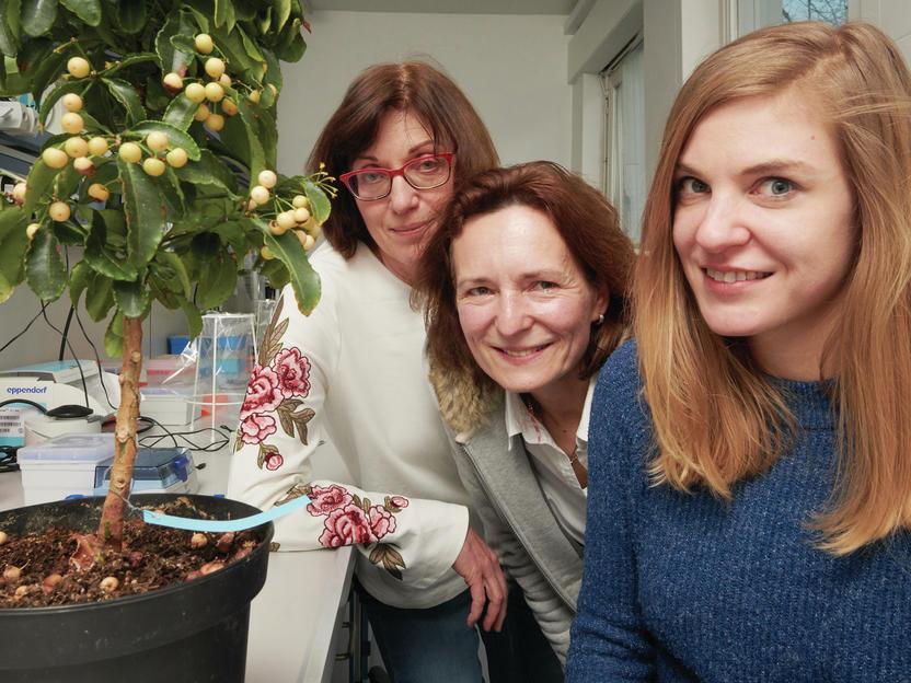 Pflanzen-Wirkstoff bremst aggressiven Augenkrebs