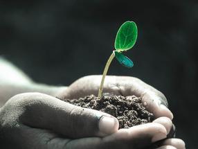 Immunsystem von Pflanzen: Es funktioniert anders als gedacht