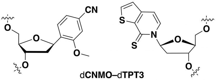 Semi Synthetische Bakterien Produzieren Unnatürliche Proteine