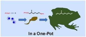Chemische Reaktionsmethoden für eine effizientere Wirkstoffproduktion