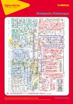 Metabolomic Pathway Map Poster
