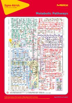 Poster « Metabolic Pathways Map »