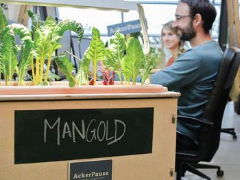 AckerCompany will mit firmeneigenen Gärten den Teamgeist stärken und eine höhere Wertschätzung von Natur und Lebensmitteln erreichen.