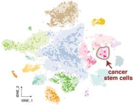 Krebsstammzellen nachverfolgen