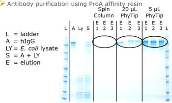 The unique PhyTip column design enables elution into small elution volumes for sample enrichment  and easier detection in following analyses.