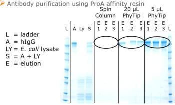 Das einzigartige PhyTip-Säulendesign ermöglicht die Elution in kleine Elutionsvolumina zur Probenanreicherung und erleichtert den Nachweis in folgenden Analysen.