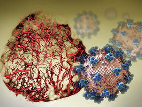 Fighting SARS-CoV-2 in human blood vessel organoids