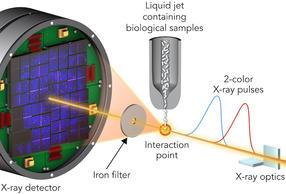 Zweifarbtechnik zeigt Röntgenlaser-Schäden in Biomolekülen