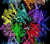 Entwicklung neuer Proteasom-Inhibitoren zur Behandlung von von Krebs-, Entzündungs- und Autoimmunerkrankungen