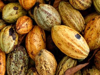 Fairtrade-Produzenten erheben ihre Stimme und fordern Nestlé auf, KitKat Fairtrade beizubehalten
