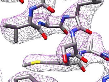 Teil der 3D-Struktur von Apoferritin