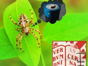What Do Spiders Have in Common with Batteries?