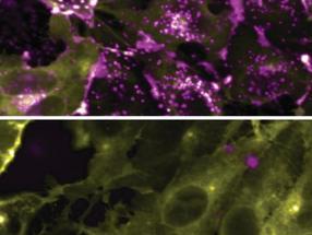 Método para estudiar con seguridad el COVID-19, otras enfermedades contagiosas desarrolladas