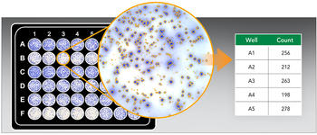 Cytation 7 can be used to automate ELISpot assays, in which cell secretions are rendered visible through the use of a colorimetric reaction.