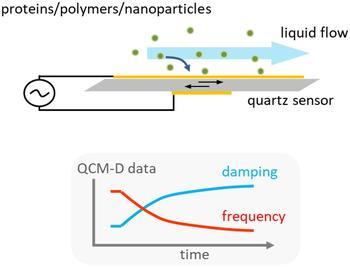 Schematische Darstellung des QCM-D Prinzips