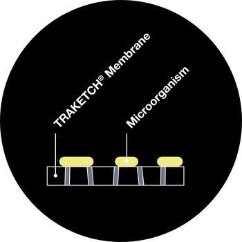 Draufsicht – Mikrobiologischer Fluoreszenz-Nachweis auf TRAKETCH® Membran