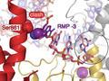 Warum Remdesivir das Coronavirus nicht vollständig ausschaltet