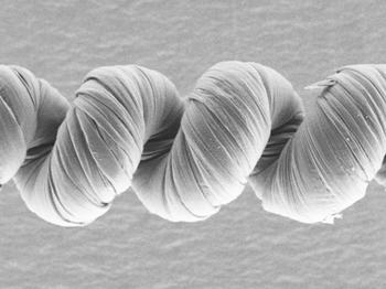 In a study posted online Jan. 28 in the journal Science, University of Texas at Dallas researchers and their colleagues describe creating powerful, unipolar electrochemical yarn muscles that contract more when driven faster. This scanning electron microscope image shows a coiled unipolar muscle made from carbon nanotubes and coated with poly(sodium 4-styrenesulfonate). The outer coil diameter is approximately 140 microns, about twice that of a human hair.