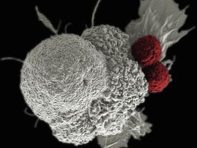 Atacar los tumores con dos tipos de virus