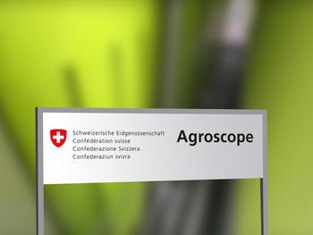 Schweizer Algen als Futtermittel