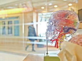 Bildung hat keinen Einfluss auf die Alterung des Gehirns
