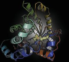 """Neuartiger """"An/Aus""""-Schalter in Proteinen entdeckt"""