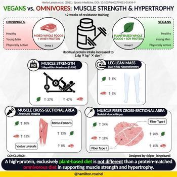 Studien, die von Forschern der Universität von São Paulo mit gesunden jungen Erwachsenen durchgeführt wurden, zeigen, dass die richtige Menge an Proteinzufuhr der Schlüssel zur Muskelgesundheit ist, unabhängig von der Proteinquelle.