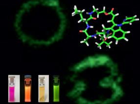Biomoleküle einfach markiert – für die Kontrolle von Immunzell-Membranen