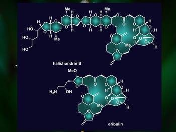 Rice University synthetic chemists have simplified the process to make halichondrin B, top, the parent compound of the successful cancer drug eribulin, bottom. Their reverse synthesis reduced the number of steps required to make the natural product.