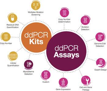 Umfangreiches Portfolio von Prime ddPCR Assays und Kits