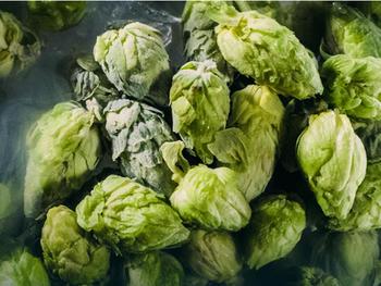 Hopfenlieferant bringt neues Produkt auf den Markt, um der globalen Craft Beer Community frische Hopfenbiere zu liefern