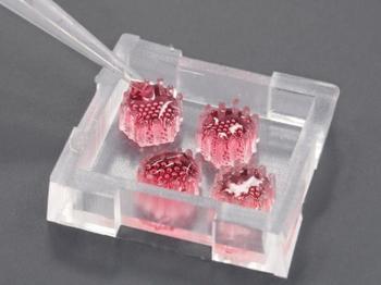 Bauchspeicheldrüsen-Organoide auf neu entwickelter Chip-Plattform