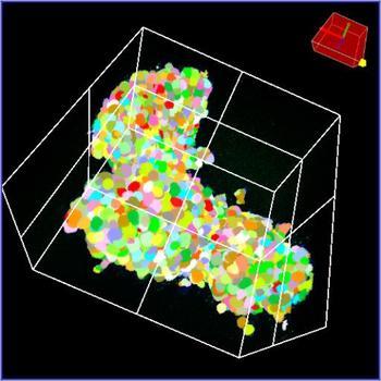 Echte 3D-Segmentierung eines Organoids mit der NoviSight 3D-Analysesoftware